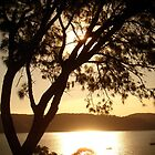 Pittwater Gold by Caine Mazoudier