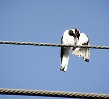 Peewee on a wire by waxyfrog