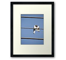 Peewee on a wire Framed Print
