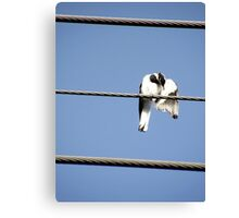 Peewee on a wire Canvas Print
