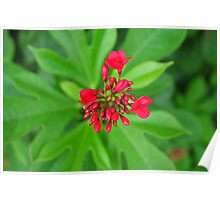 Red seed flower over green Poster