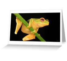 Little Red-Eyed Tree Frog Greeting Card