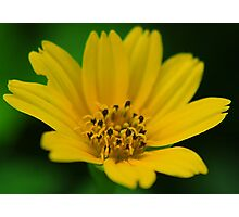 Yellow Power Photographic Print