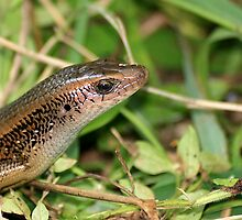 Wild Philippine Lizard by Alfredo Encallado