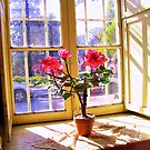 Red Flowers Behind the Window by Daidalos