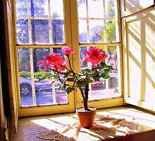 Red Flowers Behind the Window by Daidalos
