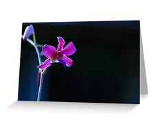 Wild Ground Orchids Greeting Card