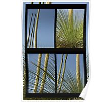 Xanthorrhoea Collage Poster