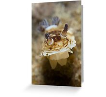 Pancake Nudibranch Greeting Card