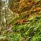 FERNS AND MOSSES AROUND THE WORLD - SEPTEMBER AVATAR 2015 - ROCKS STONE BOULDERS