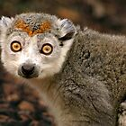 Crowned Lemur by SerenaB