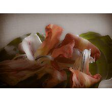 Dried Tulip Flower Petals Photographic Print