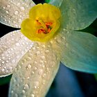 Cheeky lazy daffodil by Katherina Bilko