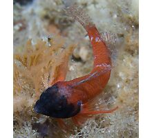 Ring Scale Triplefin Photographic Print