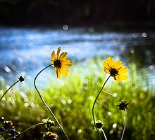 Lazy Daisy Sunday by Katherina Bilko