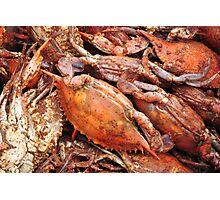 Crabs Photographic Print