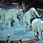 Circus Elephants by Robin Lee