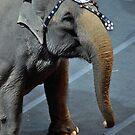 Circus Elephant by Robin Lee