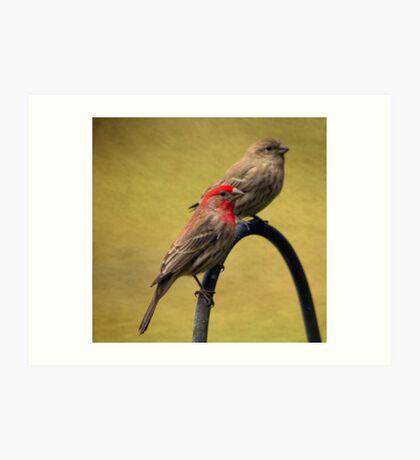 Male and Female House Finch Art Print