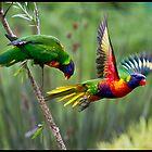 Rainbow Lorikeet by John Van-Den-Broeke