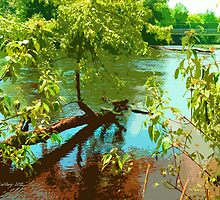 Branching the Banks of the Grass River by linmarie