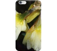 raindrops on daffodils - natures tears  iPhone Case/Skin