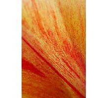 Petal Abstract Photographic Print