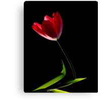 TILTING TULIP Canvas Print