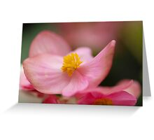 Impatiens Walleriana - Busy Lizzy Greeting Card