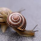 Who Says Snails Are Not Sporty? by vbk70