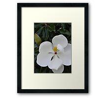 Pure White Magnolia Blossom Framed Print
