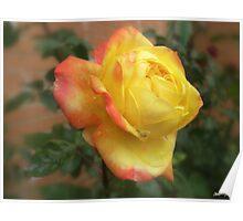 Stunning Yellow and Orange Rose 2 Poster