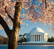 Jefferson and Cherry Blossoms by Inge Johnsson