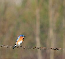 Bluebird Sings by Mully410