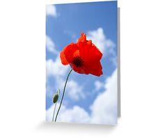 Lone poppy Greeting Card