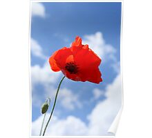 Lone poppy Poster