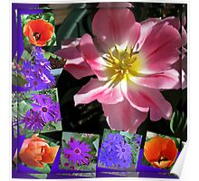 Spring Sunshine Tulips Collage Poster