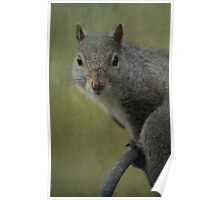 Squirrel Portrait Poster