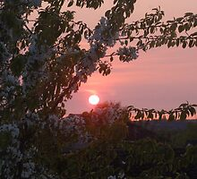 waterloo sunset by Suzanne Jeffs