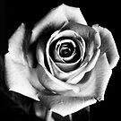 A Rose by FlashGordon666