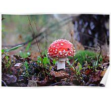 mushroom :) Poster