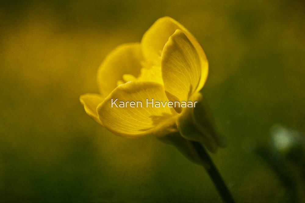 Buttercup  by Karen Havenaar
