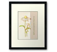Scribbler-Echinacea Framed Print