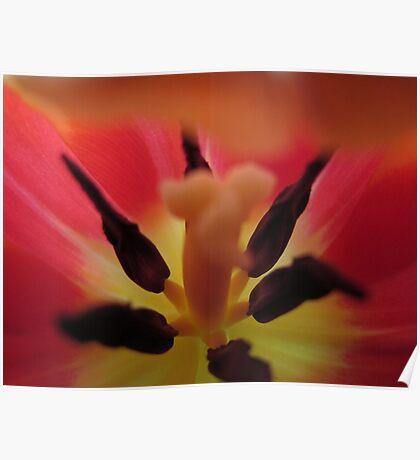 Tulip megahorn Poster