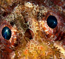 Scorpionfish eyes by Imaginarium