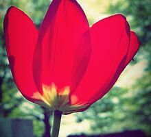 Spring by Josephine Pugh
