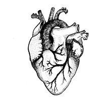 Anatomical Heart by RollingSuika