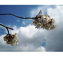 Blossoms Beneath the Sky Photographic Print