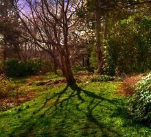 Shadows in the Garden by Monica M. Scanlan