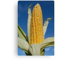 Ripe corn Canvas Print